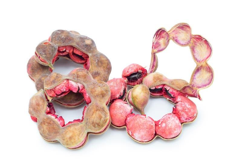 Tamarind της Μανίλα φρούτα που απομονώνονται στο άσπρο υπόβαθρο στοκ εικόνες