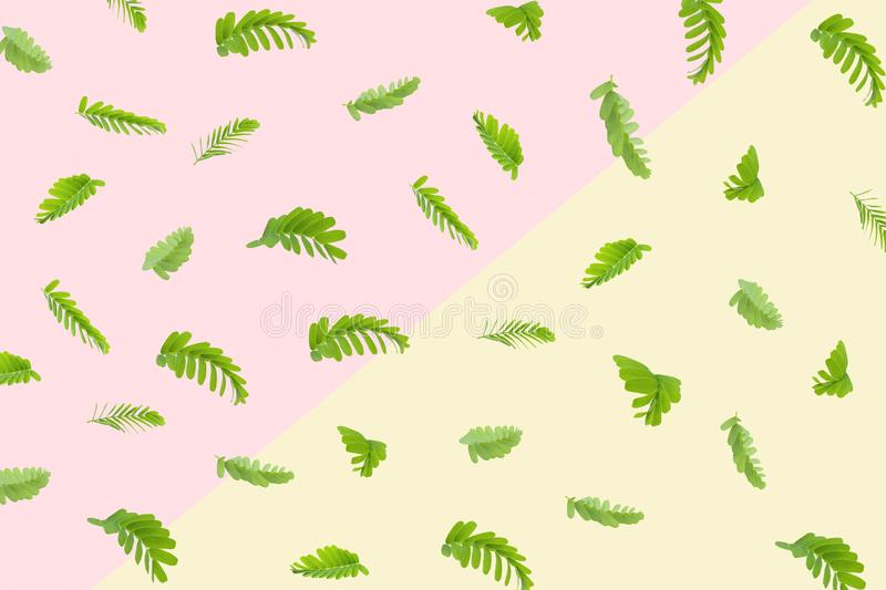 Tamarind leaves isolated on color pastel background royalty free illustration
