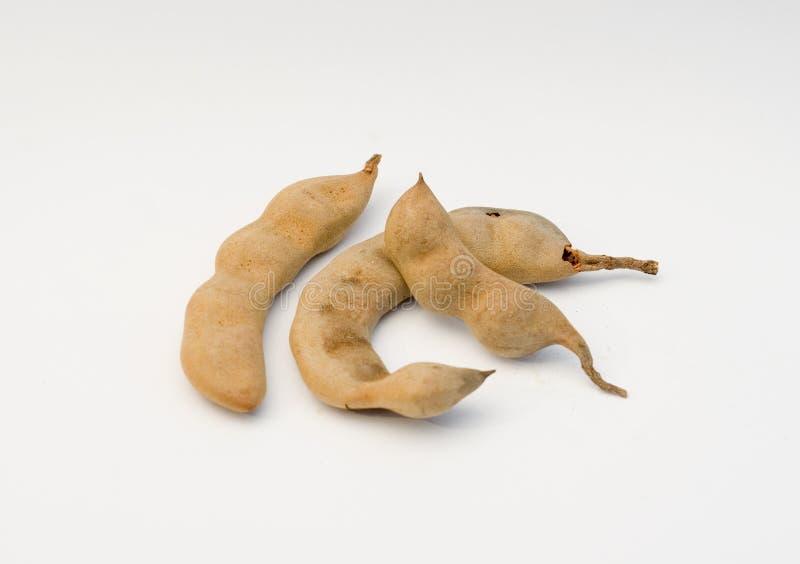 Tamarind Tamarindus indica stock images