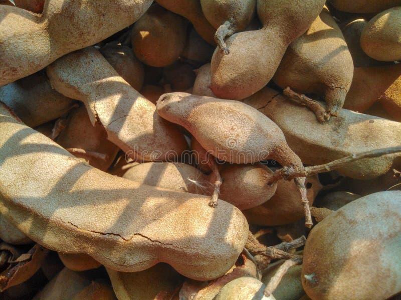 Tamarindo tailandés de la fruta foto de archivo