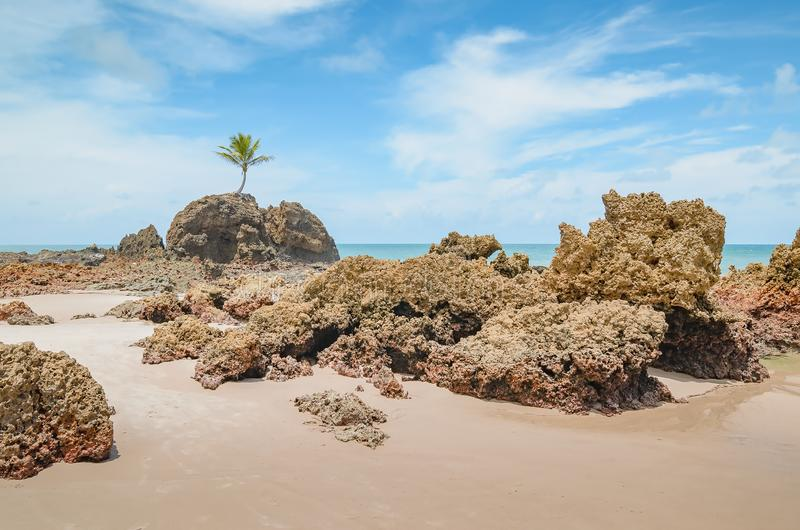 Tambaba beach, Conde PB Brazil. View of Praia de Tambaba beach, Costa do Conde. Famous beach by the coconut tree that grew on top of a rock. Beautiful Brazilian royalty free stock images