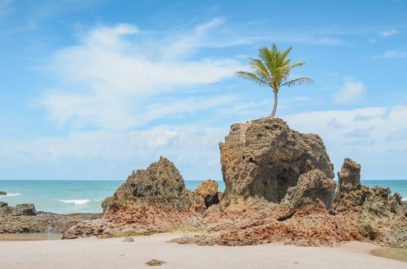 Tambaba beach, Conde PB Brazil. View of Praia de Tambaba beach, Costa do Conde. Famous beach by the coconut tree that grew on top of a rock. Beautiful Brazilian stock photos