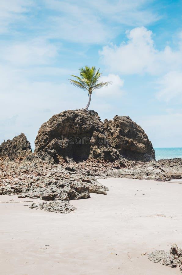 Tambaba beach, Conde PB Brazil. View of Praia de Tambaba beach, Costa do Conde. Famous beach by the coconut tree that grew on top of a rock. Beautiful Brazilian royalty free stock photos