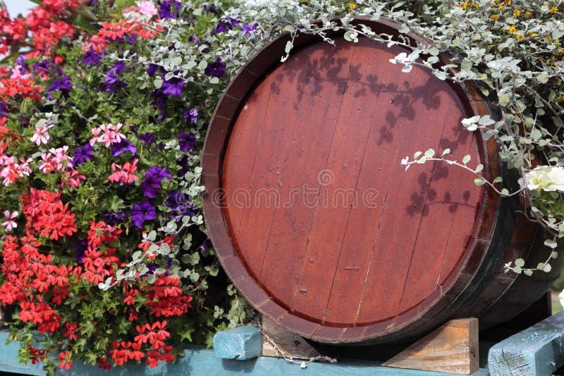 Tambor de vinho de madeira do vinhedo de França com exposição da flor na colheita da uva imagens de stock royalty free