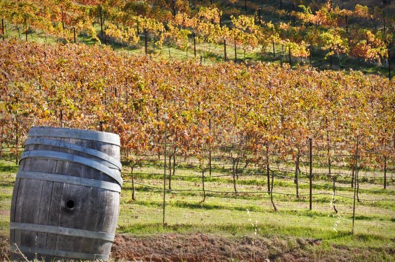 Tambor de vinho na queda fotos de stock royalty free