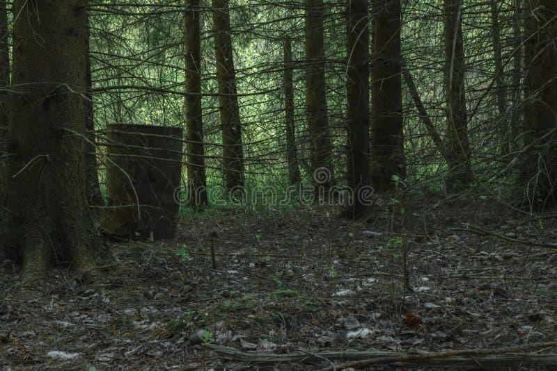 Tambor oxidado na floresta imagens de stock