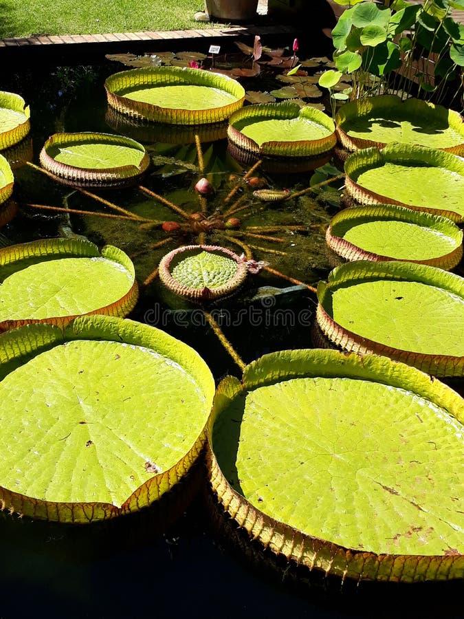 Tamboretes da lagoa imagem de stock