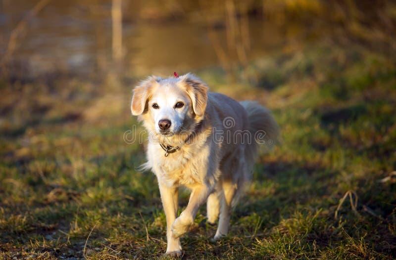 Tamdjurhund royaltyfria bilder