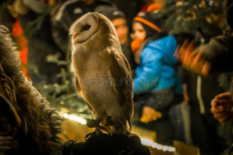 Tame owl at christmas market Guteneck. Closeup of an tame owl at christmas market Guteneck stock photos