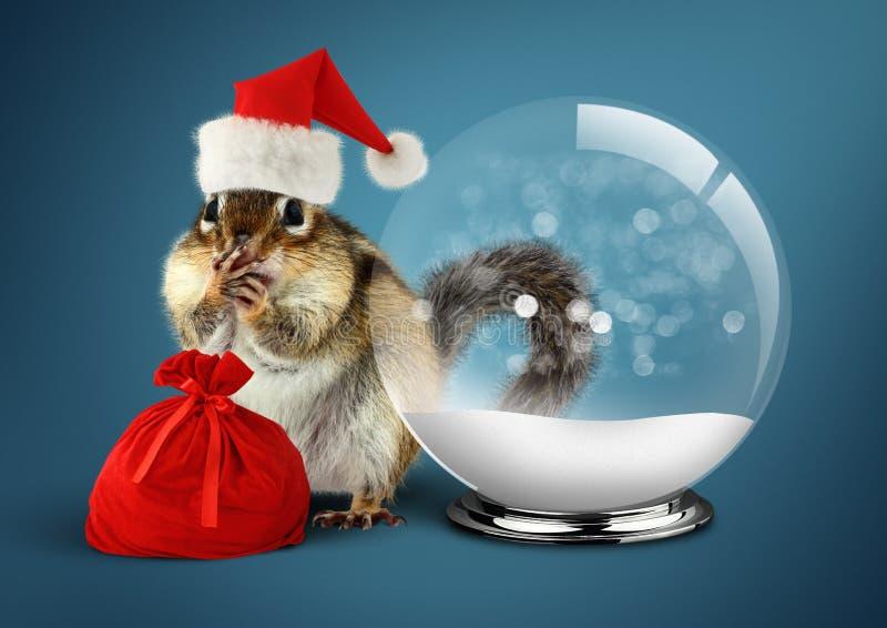 Tamia animale divertente vestita come Santa con la palla della neve e la borsa, c fotografia stock