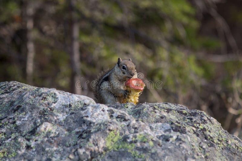Tamia nel lago bear in Rocky Mountain National Park fotografia stock