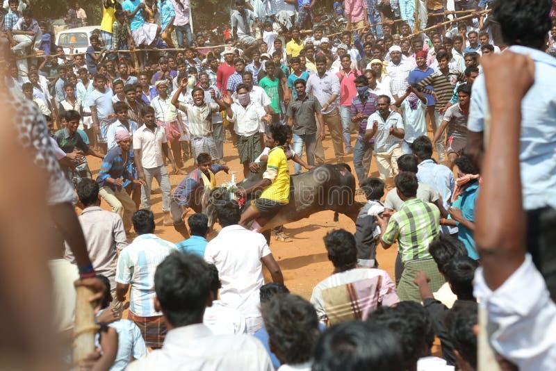 Tamilnadu Индия фестиваля virattu Manju стоковое изображение rf