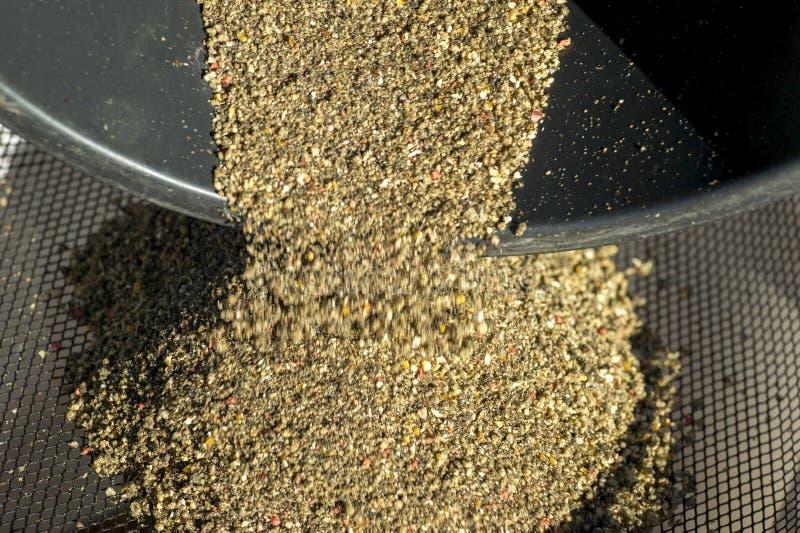 Tamisage de l'appât au travers d'un tamis pour préparer une masse homogène pour attirer des poissons image libre de droits