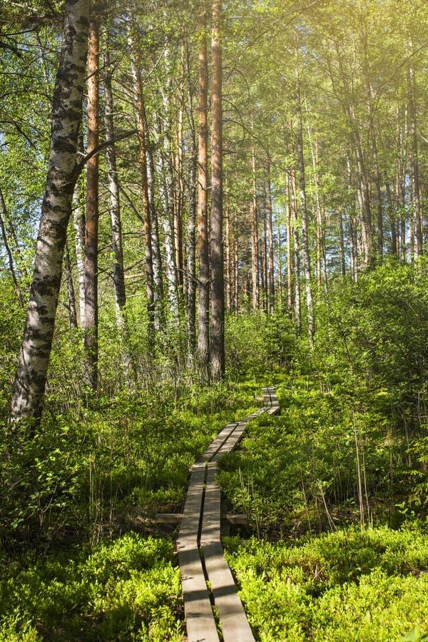 Tammela, Finland Free Public Domain Cc0 Image