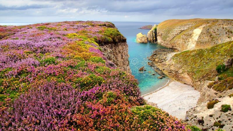 Download Tampão Frehel. Brittany, France Foto de Stock - Imagem de heather, idyllic: 26502728