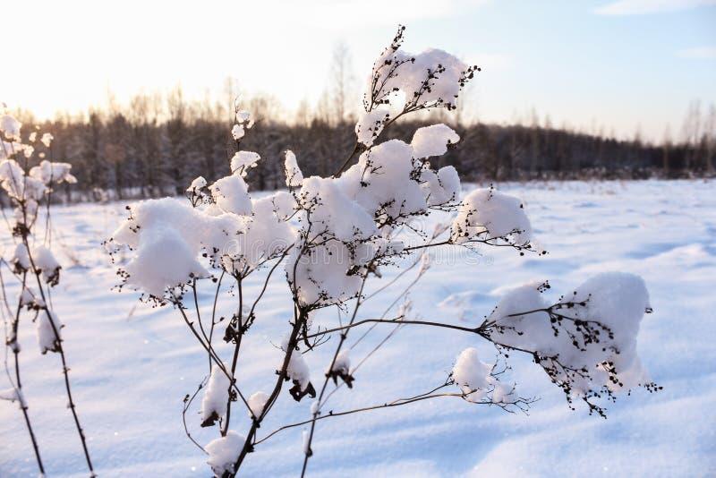 Tampões da neve na planta imagem de stock