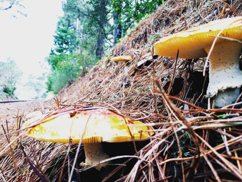 Tampões do cogumelo ao longo das trilhas de estrada de ferro de Aptos foto de stock