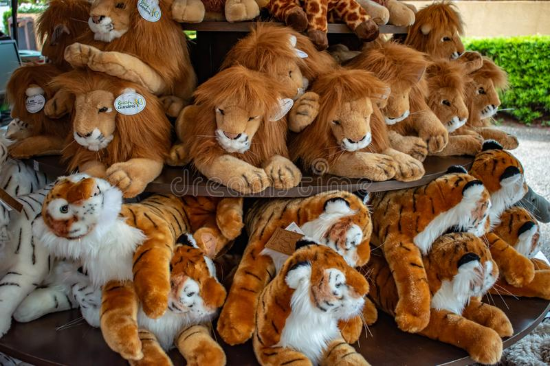 Plushies bengal tigers and white tigers at Busch Gardens 1 royalty free stock photos