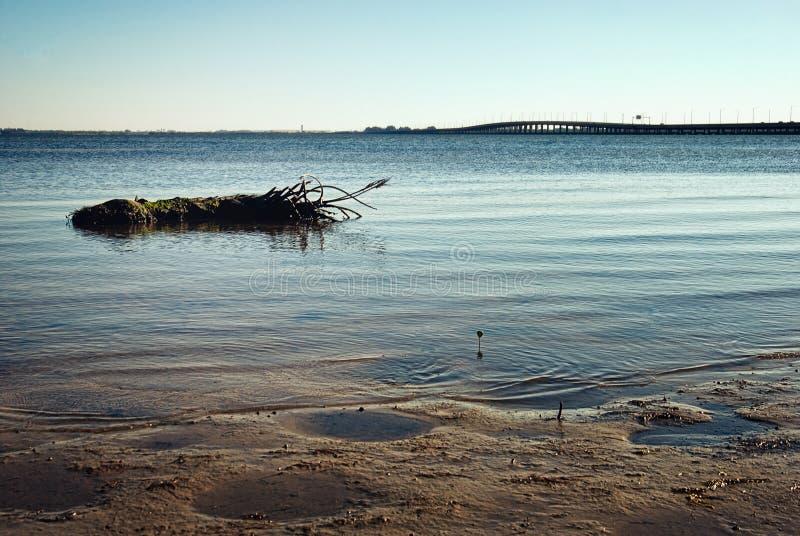 Tampa Bay Shoreline med att sväva gömma i handflatan stubben arkivbilder