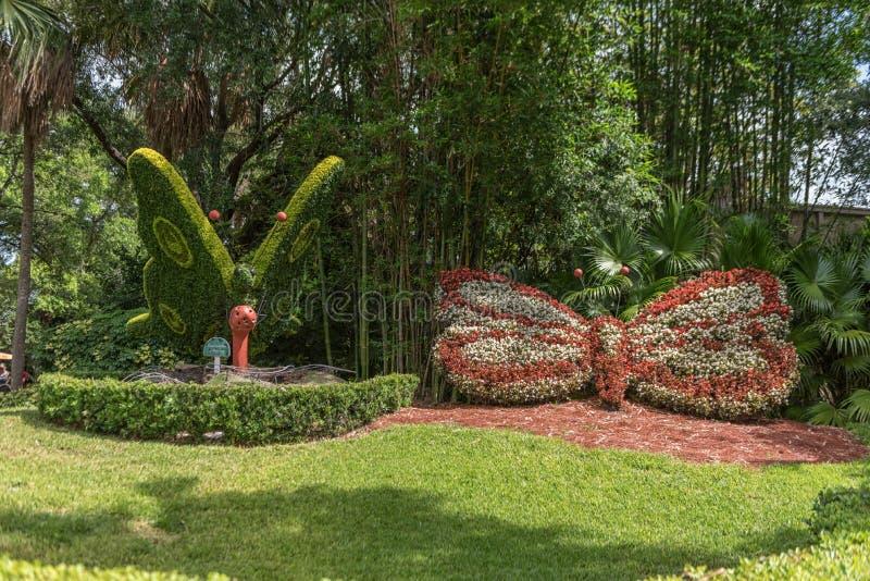TAMPA FLORIDA - MAJ 05, 2015: Blomma i Busch trädgårdar Tampa Bay Florida royaltyfria bilder