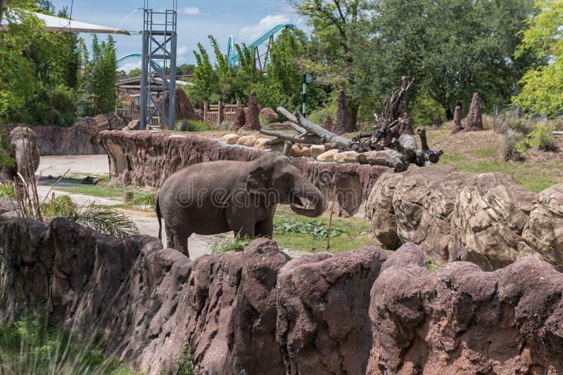 TAMPA FLORIDA - MAJ 05, 2015: Elefant i Busch trädgårdar Tampa Bay Florida arkivbild