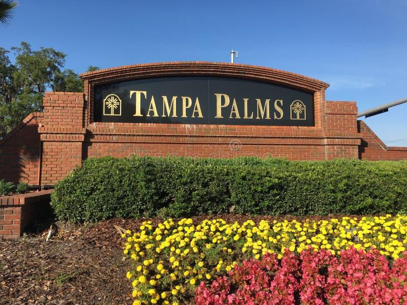 Tampa palm spo?eczno?? zdjęcia stock