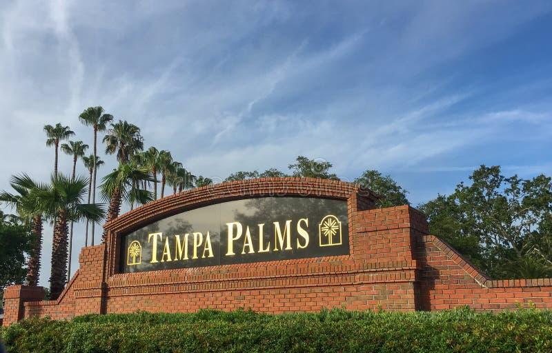 Tampa palm spo?eczno?? zdjęcie stock