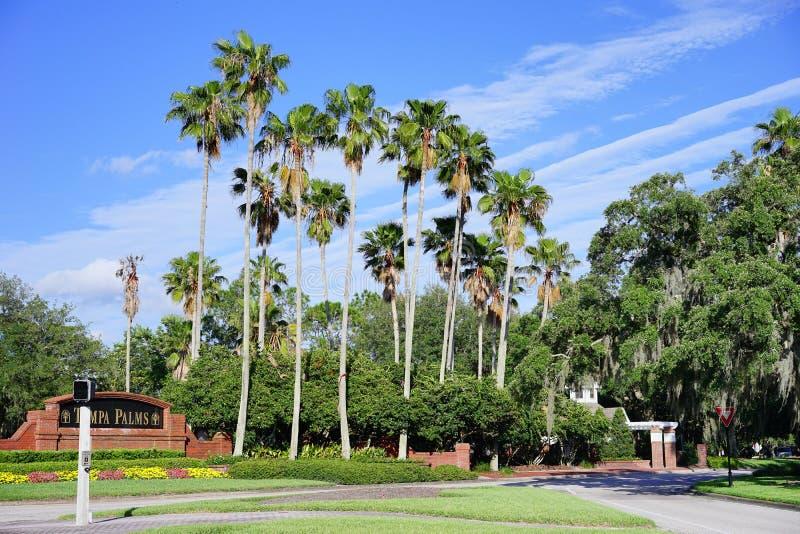 Tampa-Palmengemeinschaft lizenzfreies stockfoto