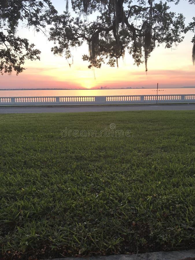 Tampa sunrise. Ballast point park royalty free stock photos