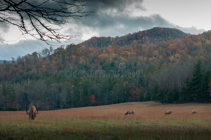 Tan And Black Animal On Brown And Green Grassfield Beneath A Mountain Under Grey Sky Free Public Domain Cc0 Image