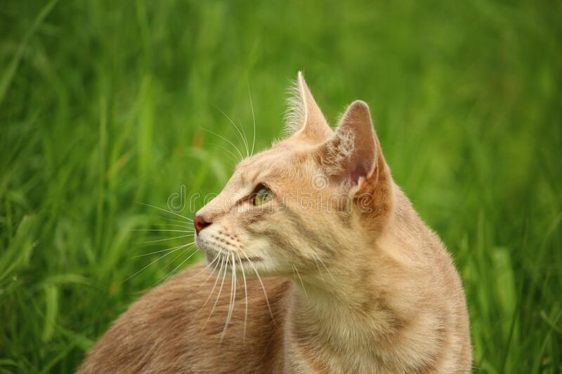 Tan Cat Beside Green Grass during Daytime stock photography