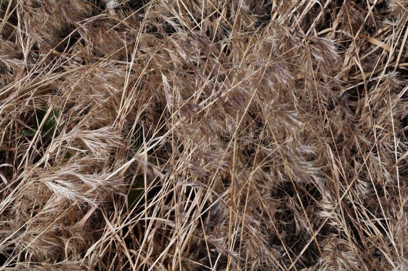 Tan dried prarie grasses.