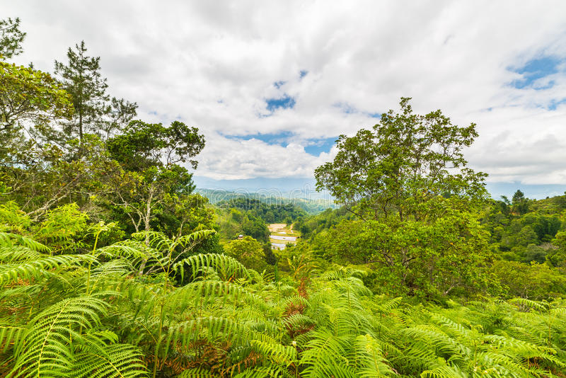 Tana Toraja landscape and fern forest. Dense rainforest and stunning landscape in Toraja Area, South Sulawesi, Indonesia. Panoramic view from above with dramatic stock images