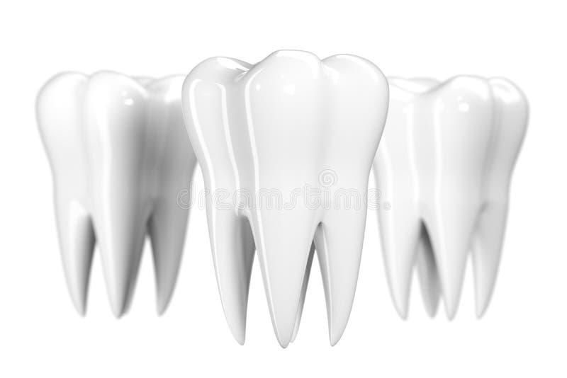 Tand die op witte achtergrond wordt geïsoleerd De gezonde 3d illustratie van het tandenpictogram van witte email en wortel E stock illustratie