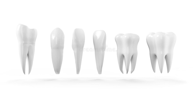 Tand geïsoleerde pictogramreeks Gezonde tanden 3d illustratie met witte email en wortel Tandheelkunde, tandgezondheidszorg royalty-vrije illustratie