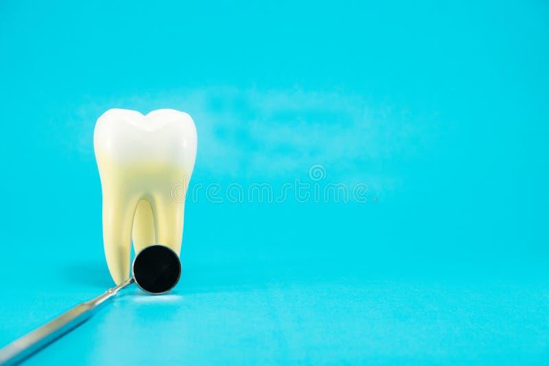 Tand- hj?lpmedel och tandanatomi fotografering för bildbyråer