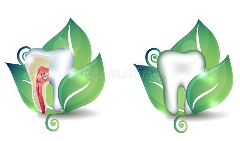 Tand- och bladsymboluppsättning royaltyfri illustrationer