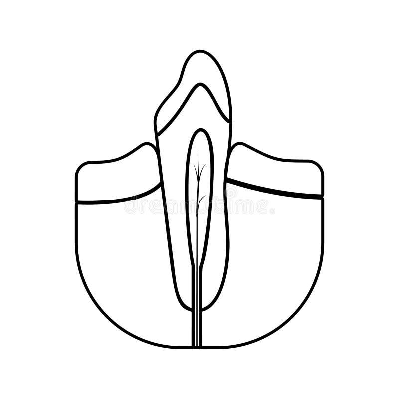 tand- rota symbolen Beståndsdel av tand- för mobilt begrepp och rengöringsdukappssymbol Tunn linje symbol för websitedesignen och stock illustrationer