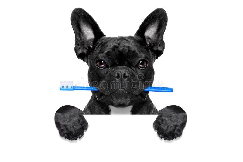 Tand- tandborstehund royaltyfri foto