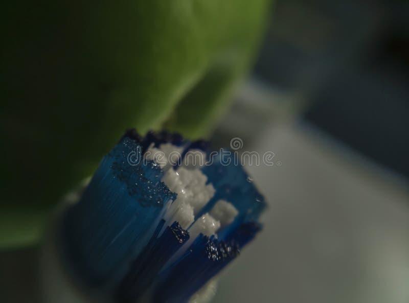 Tandenborstelvarkenshaar zonder toothpaste_macro stock fotografie