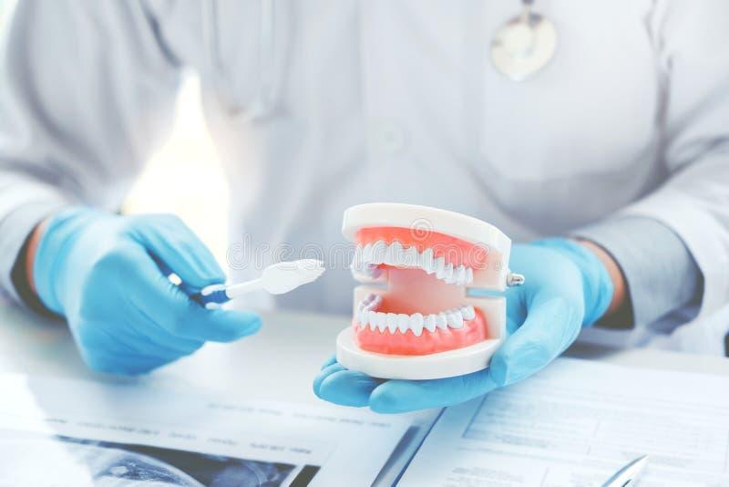 Tandläkare som lär hur man borstar tänder royaltyfri foto