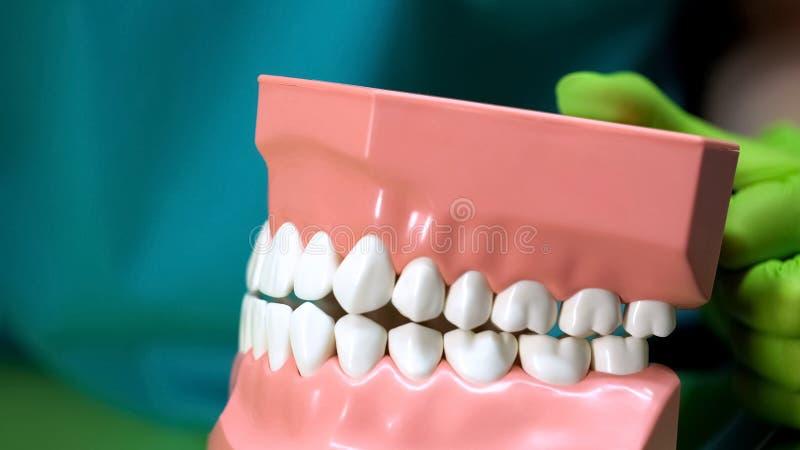 Tandläkare som rymmer den konstgjorda käkemodellen som visar patienttandvårdregler arkivbild