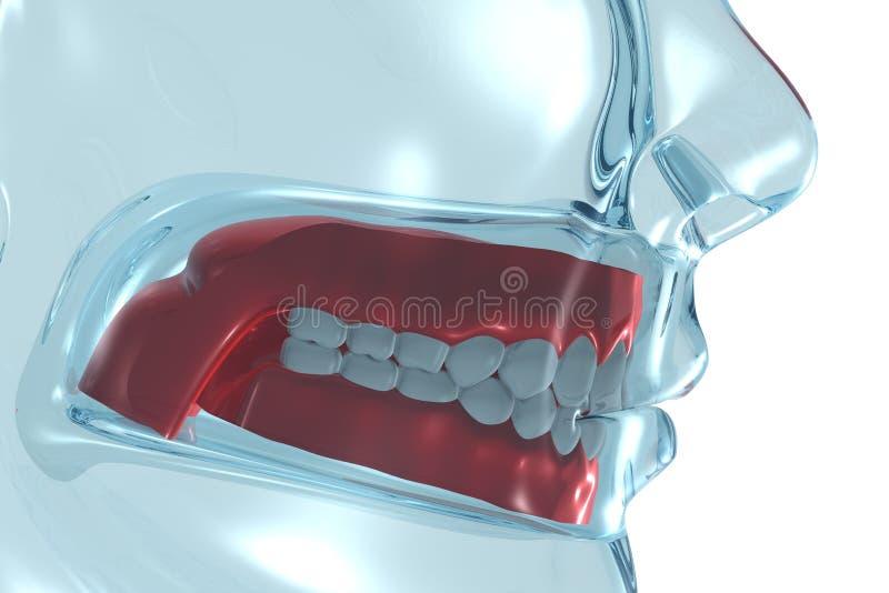 tandprotes vektor illustrationer