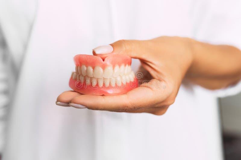 Tandprothese in de handen van het artsenclose-up Tandarts die ceramische tandbrug houden Vooraanzicht van volledig gebit royalty-vrije stock fotografie