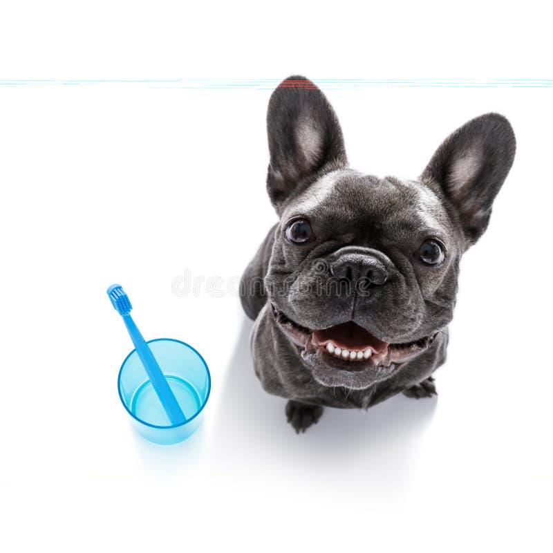 Tandtandenborstelhond stock foto's