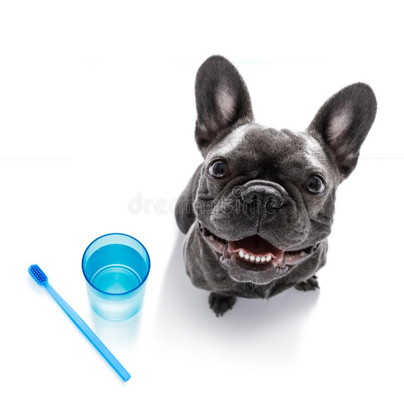 Tandtandenborstelhond royalty-vrije stock foto