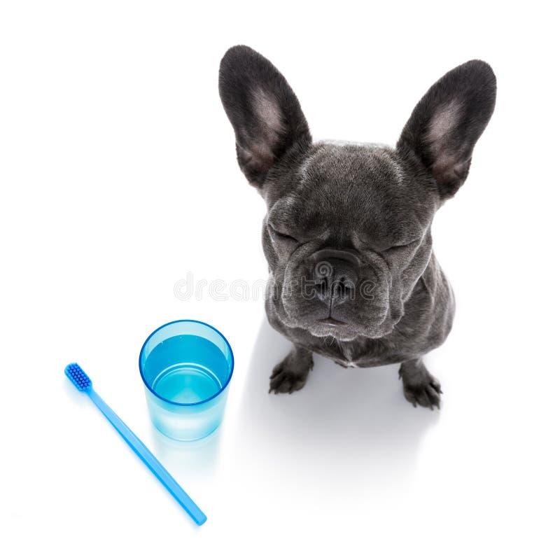 Tandtandenborstelhond stock afbeeldingen