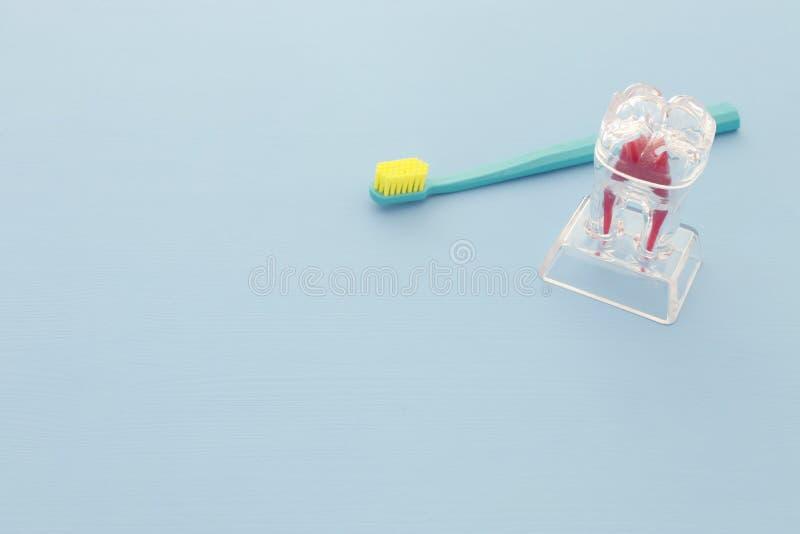 Tandtandenborstelzorg en tandmodel in de kliniek Houten blauwe achtergrond stock fotografie