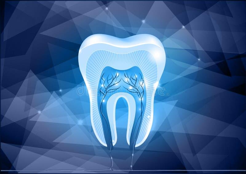 Tandtvärsnittdesign stock illustrationer
