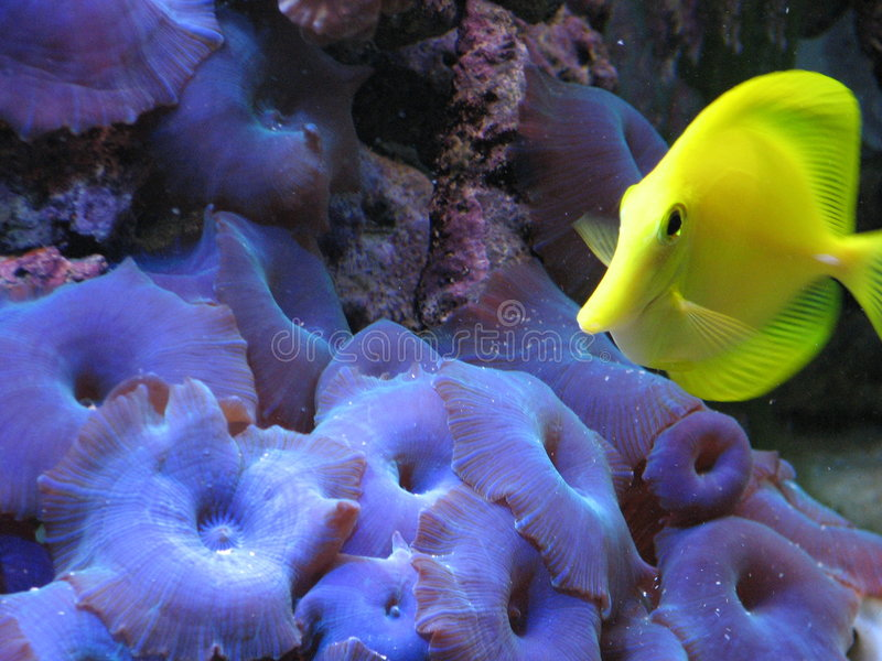 tang żółty zdjęcie royalty free